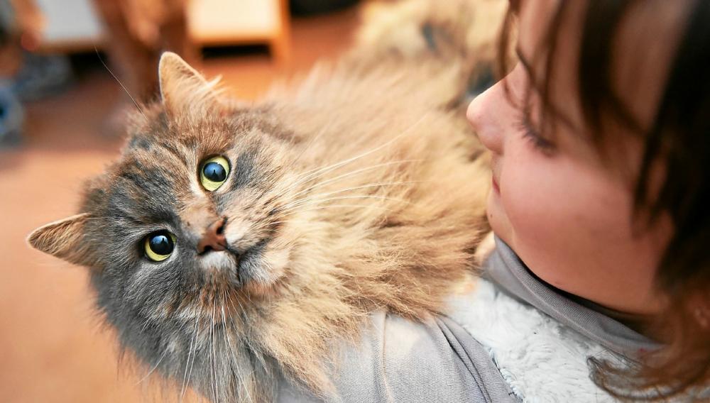 Allergie au chat.