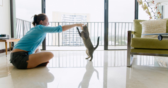 dresser un chat.