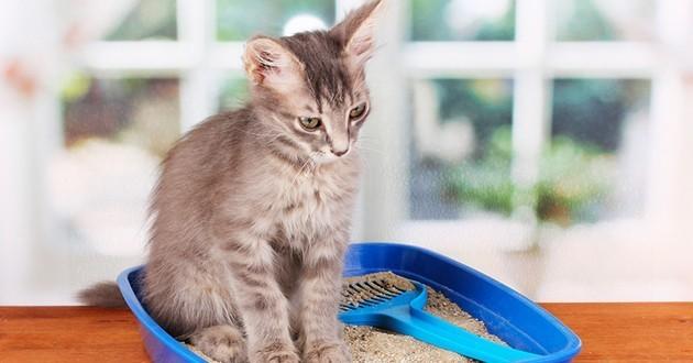 habituer son chat à utiliser sa litière.